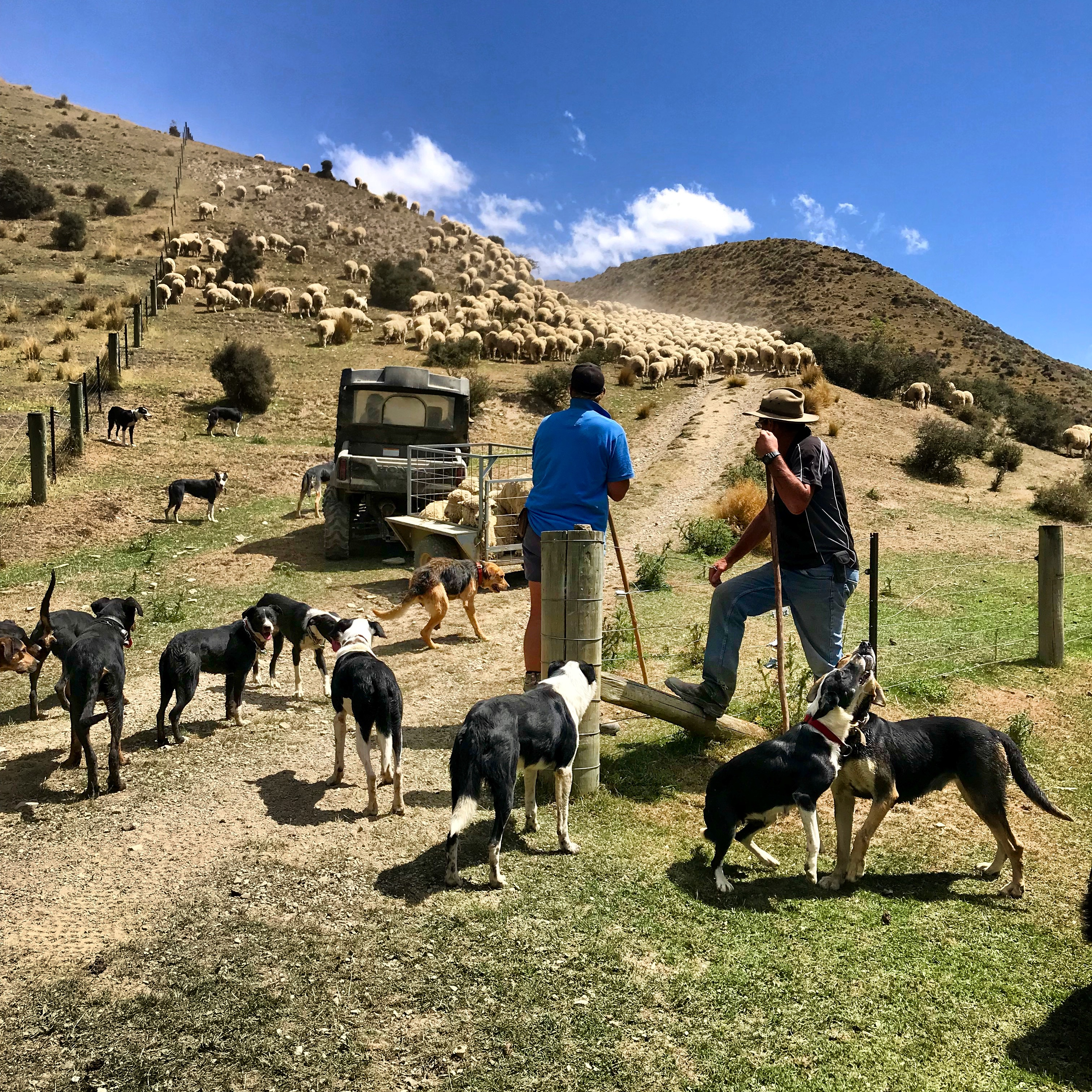 High Country shepherds and their dogs in the Danseys Pass on the South Island of New Zealand.